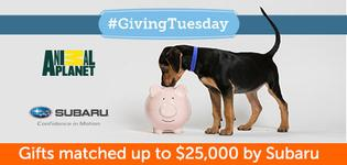 2017 ASPCA Giving Tuesday