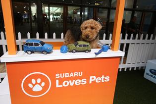 Subaru Helps Save the Lives of Pets During Auto Shows