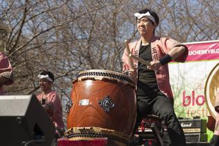 2017 Cherry Blossom Festival