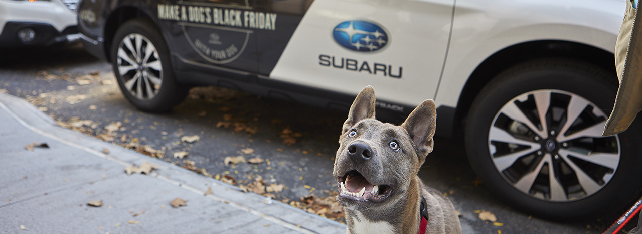 SUBARU ENCOURAGES DOG LOVERS EVERYWHERE TO ENJOY THE GREAT OUTDOORS WITH THEIR DOGS AS PART OF REI #OPTOUTSIDE MOVEMENT
