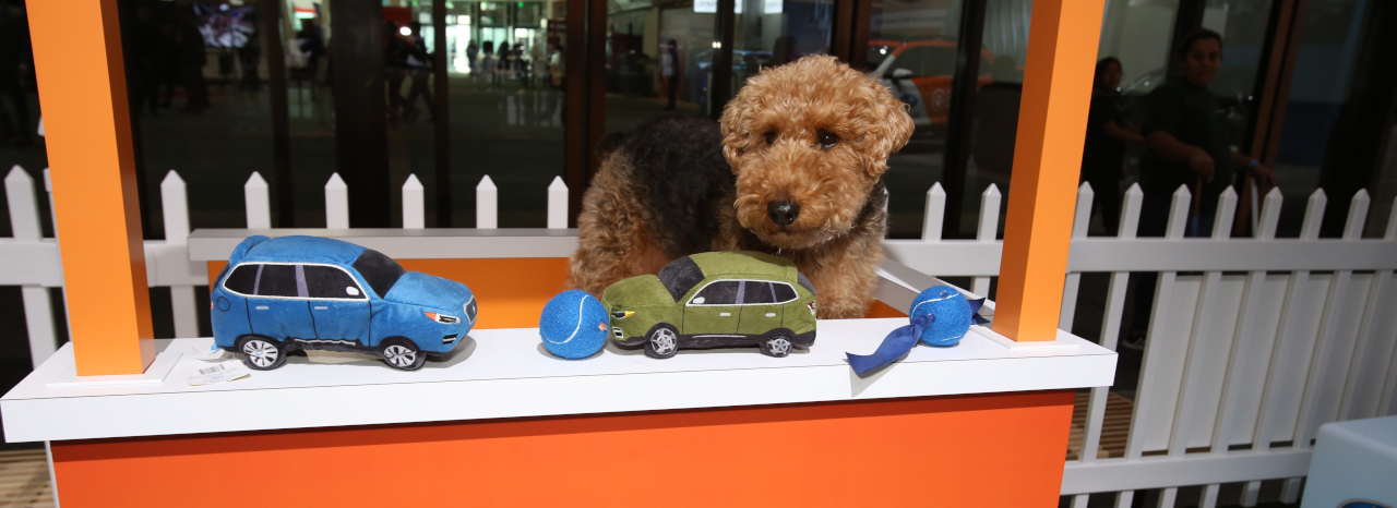 SUBARU OF AMERICA EXPANDS PET ADOPTIONS TO MORE THAN 40 NATIONAL AUTO SHOWS NATIONWIDE