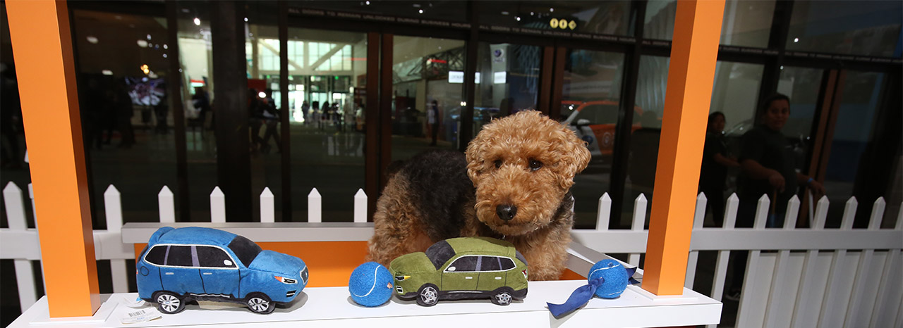 SUBARU HOSTS EVENT TO HELP PETS FIND HOMES DURING 2019 PHILADEPHIA AUTO SHOW